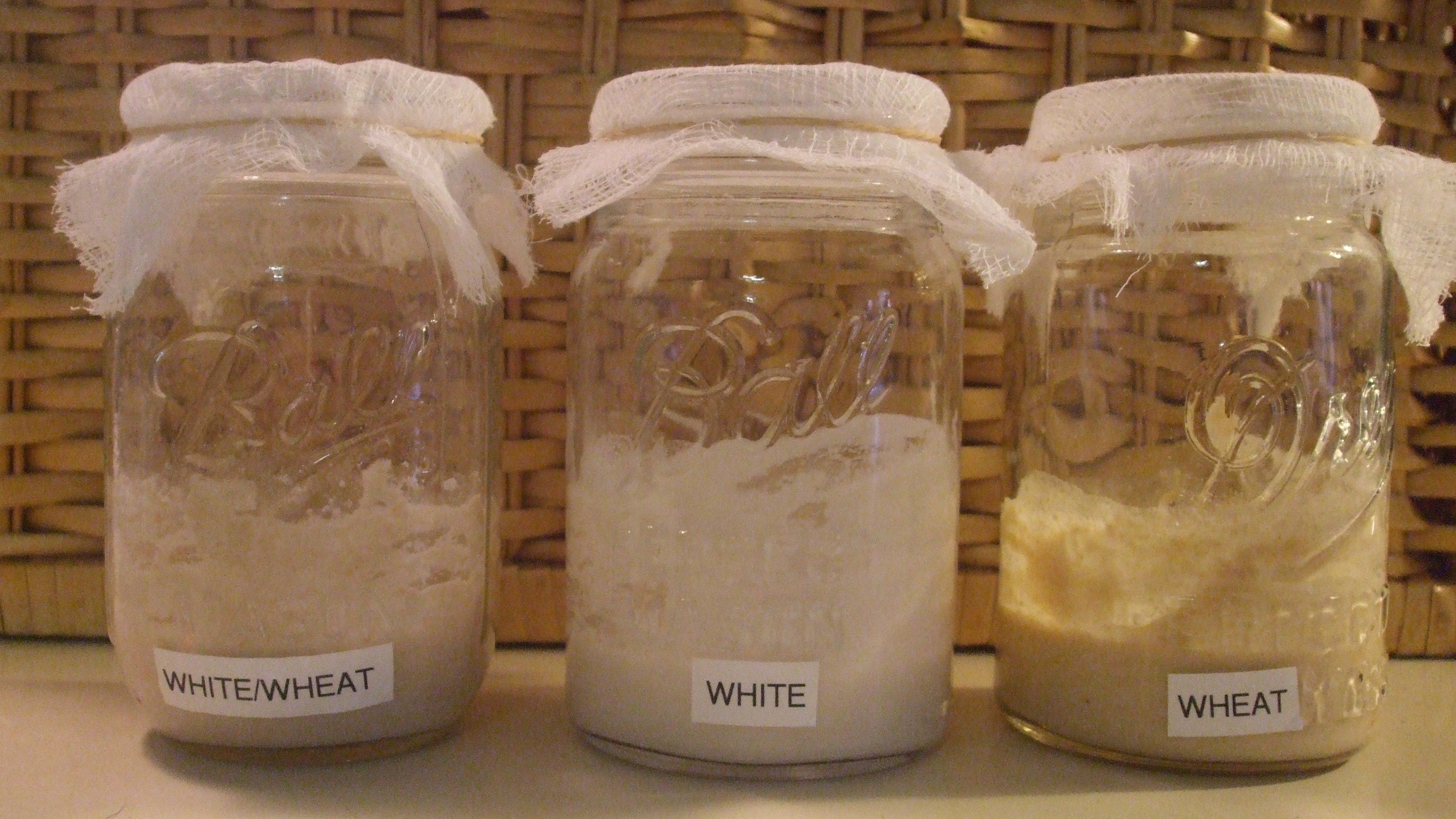 Sourdough Starter with Cheese Cloth