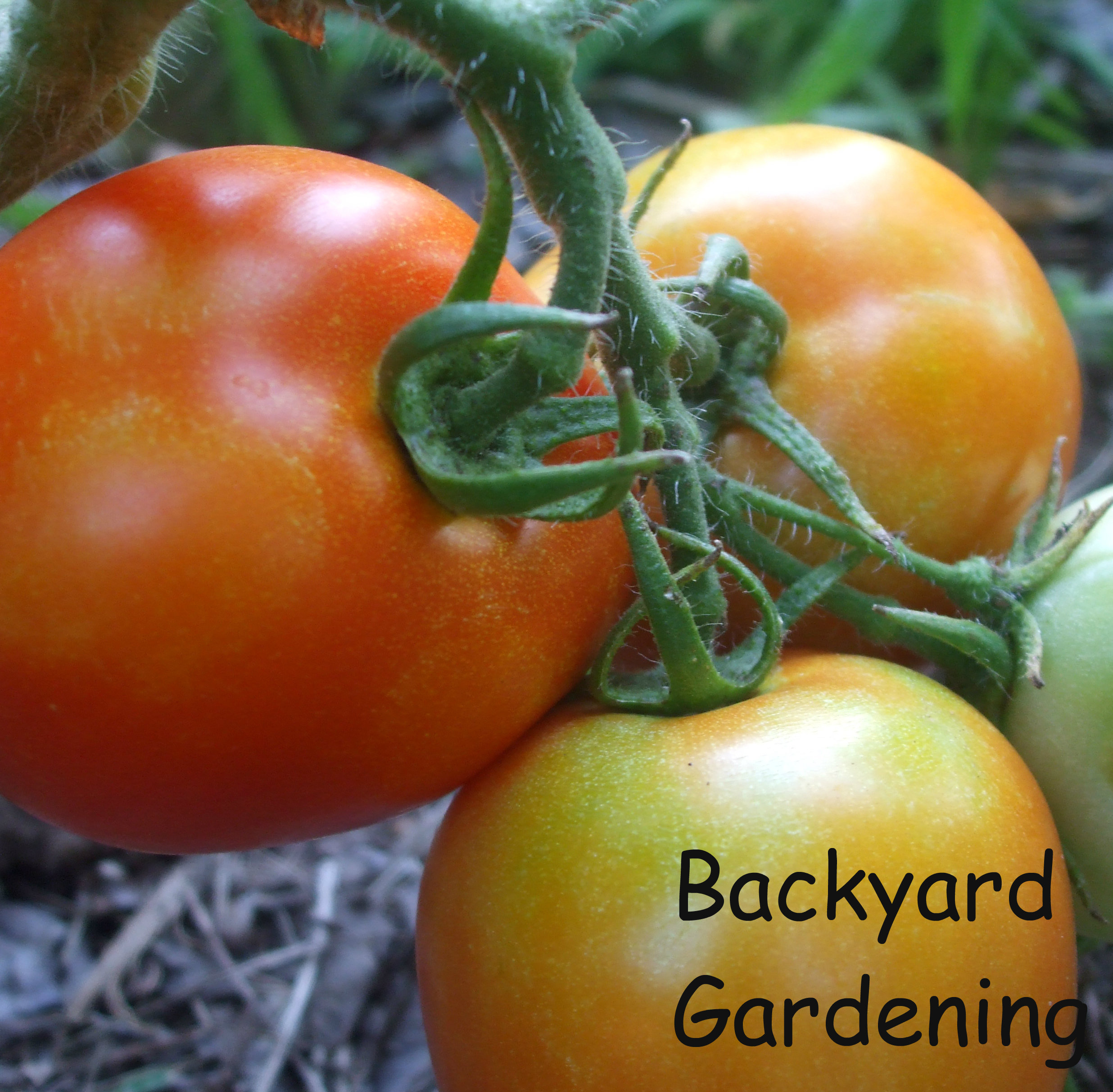 Backyard Gardening My Garden is Planted Mamal Diane