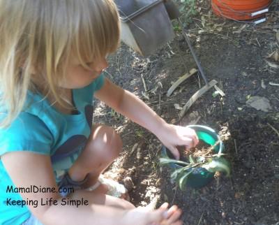 Backyard Gardening 9