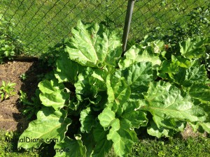 Backyard Gardening 004
