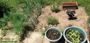 Backyard gardening 0011