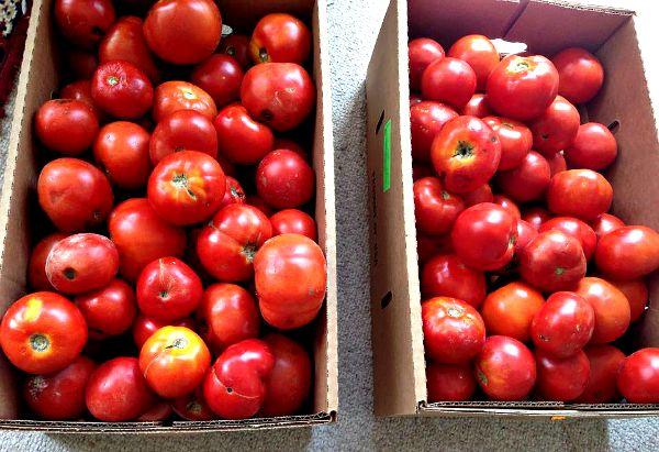 Freezing Fresh Tomatoes 04