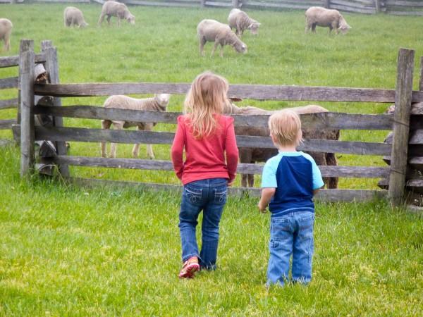 Carriage Hill Farm 011