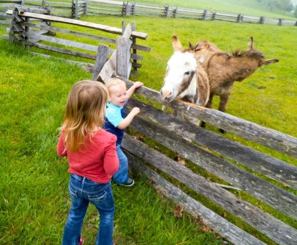 Carriage Hill Farm 026a