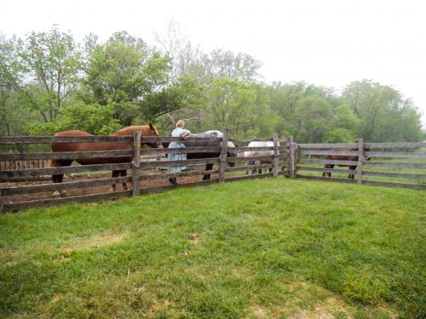 Carriage Hill Farm 033