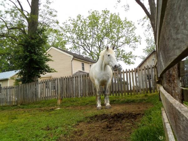 Carriage Hill Farm 040
