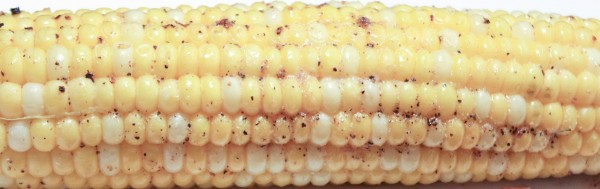 Simple Oven Roasted Corn on the Cob 2